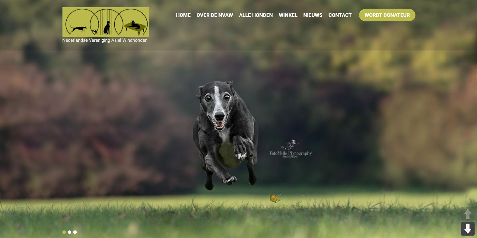 Nederlandse Vereniging voor Asielwindhonden